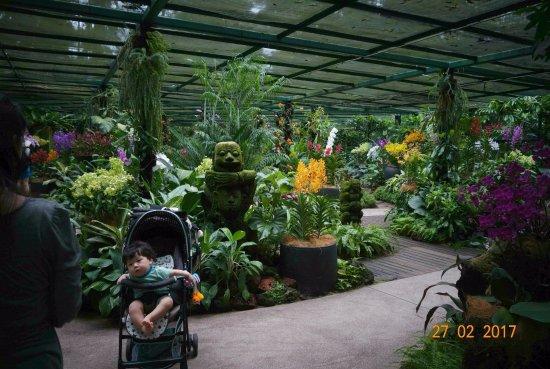 Jardin botanique singapour picture of singapore botanic for Jardin botanique singapour