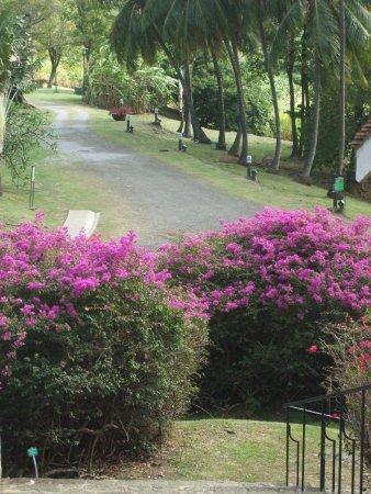 Le Francois, Martinica: Habitation Clement