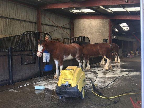 Nine Mile Burn, UK: Peggyslea Farm