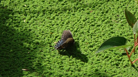 Naples Botanical Garden : in the butterfly house