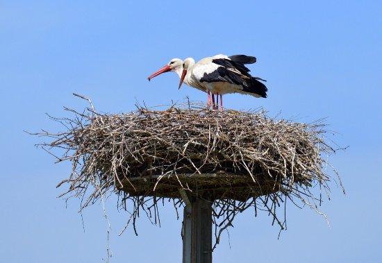 Mazeres, France: Domaine des Oiseaux