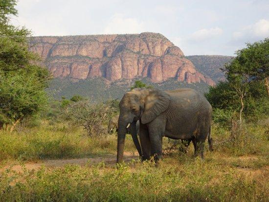 Thabazimbi, Südafrika: Wildlife in beautiful surroundings.