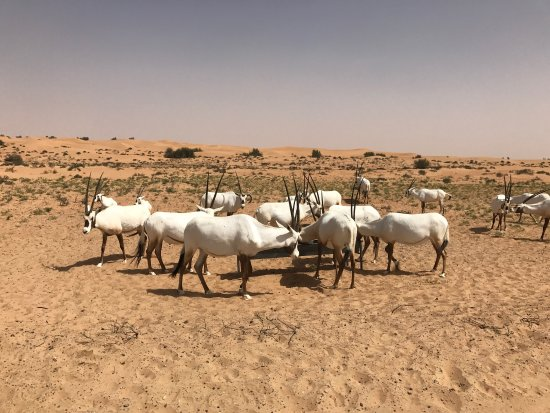 Al Maha, A Luxury Collection Desert Resort & Spa: photo1.jpg