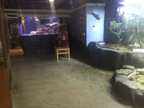 turle picture of aquarium of boise boise tripadvisor