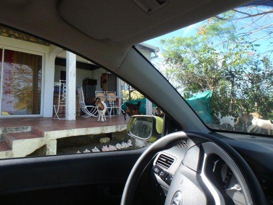 Kristal'Inn Cottage: En fin d'après midi les chèvres ont l'habitude de faire un tour sur la terrasse du bungalow