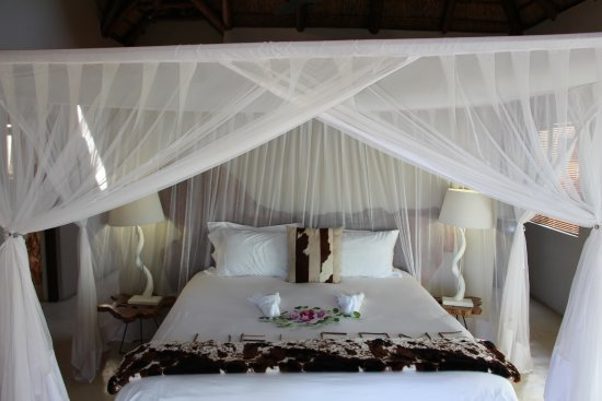 Naledi Bushcamp and Enkoveni Camp: SUITE