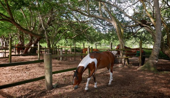 Tropical Trail Rides - Isabela: The horses were all well cared for and gentle. You can tell they are shown a ton of love.