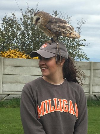 Balbriggan, Ierland: Wonderful photo ops with all the owls! This is Bella