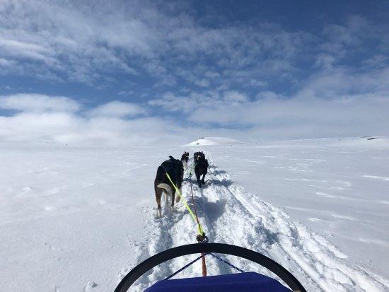Geilo, Norwegia: Fantastisk 2 dagers tur Dyranut, Rauhelleren, Hein, Tuva og retur. 23 glade huskyer, utrolig kyn