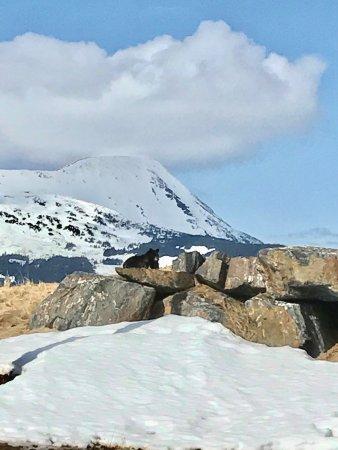 Girdwood, AK: photo6.jpg