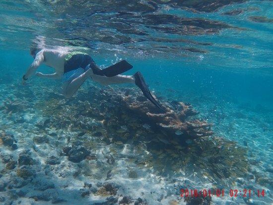 Seahorse Sail and Snorkel Adventure: Snorkeling