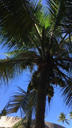 Patachocas Beach Resort: photo7.jpg