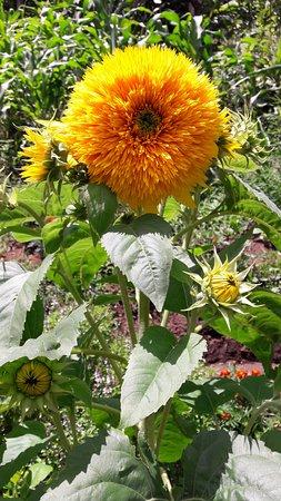 Nuevo Arenal, Costa Rica: Gardens