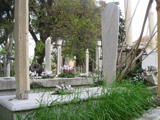 Ciclamini sulle tombe