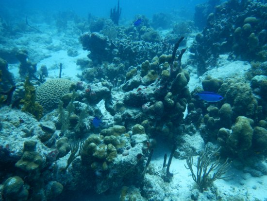 Jolly Harbour, แอนติกา: coral and fish