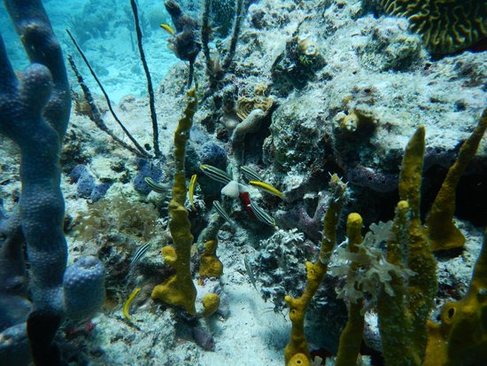 Jolly Harbour, Antigua: more coral and fish