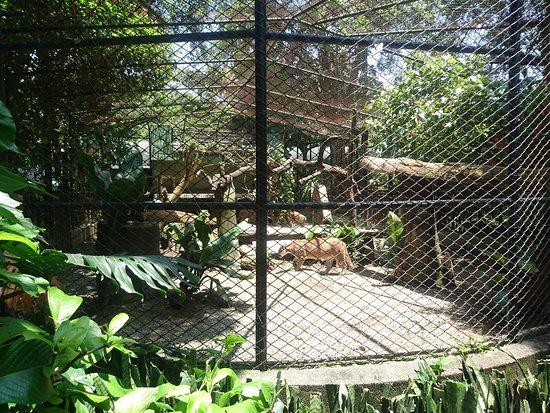 Parque Zoologico Santa Fe: Puma