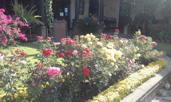 Aurora Hotel: Jardín interior
