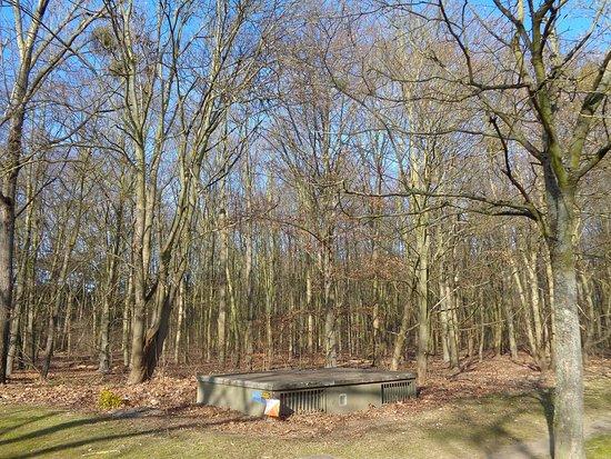 La Courneuve, Frankrig: Winter in the park