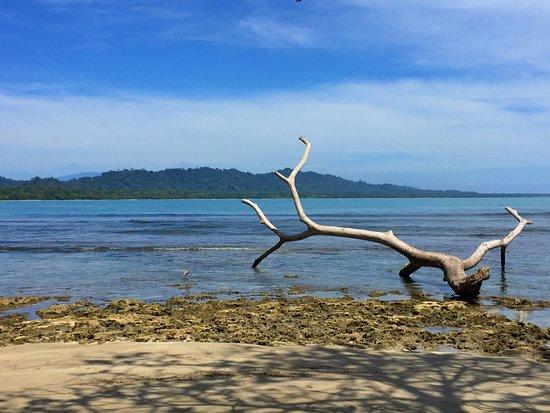 Puerto Viejo Beach: troncos cerca de la orilla