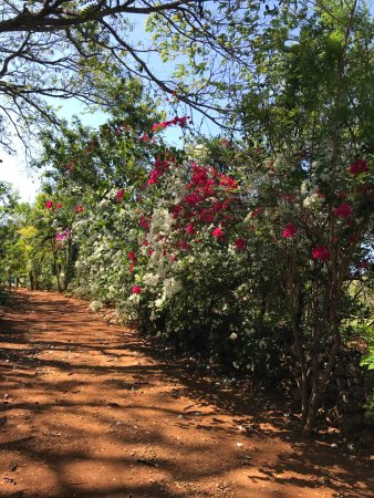 Jah Freedom Guesthouse: Beautiful Flowers walking down the lane