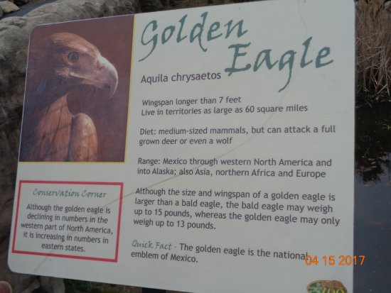 Norristown, Pensilvania: Golden eagle sign