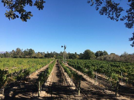 Santa Barbara Santa Ynez Wine Tours
