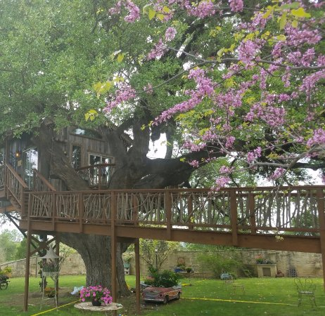 The Tree House Available For Rental For Lunch And Dinner For