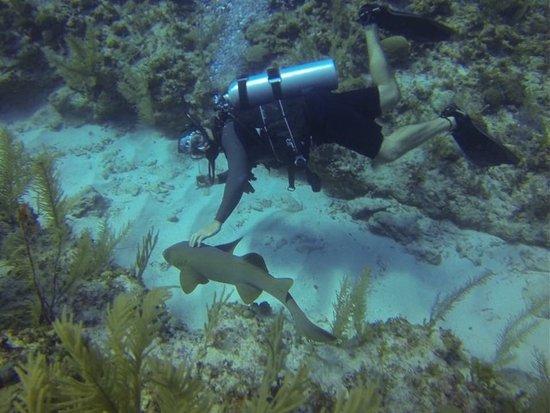 Reef Adventures Belize Foto