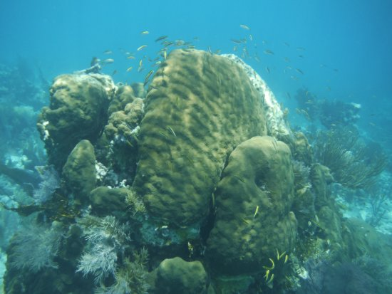 Sea Sports Belize : Corals and tropical fish
