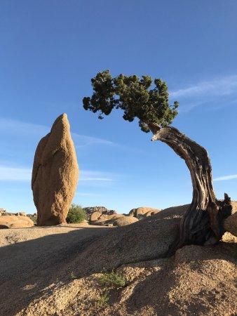 Twentynine Palms, Kalifornien: photo7.jpg