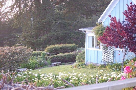 Little River, Californien: Circa '62 front garden