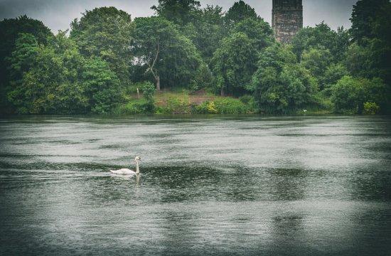 Lymm, UK: Swan coming to see us.