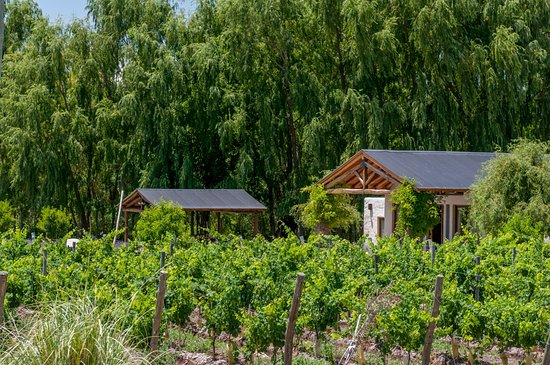 Los Sauces, Argentina: villa homes in the vineyards