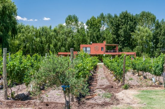 Los Sauces, Argentina: enjoy vineyard lifestyle