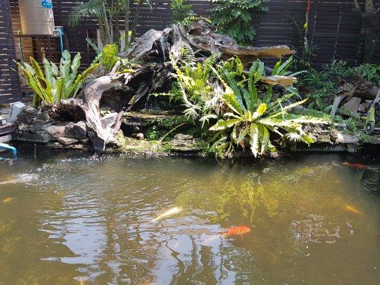 San Kamphaeng, Thailand: Koi pond