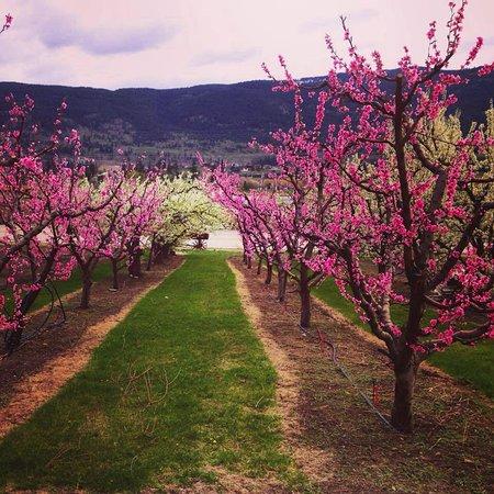 Oyama, Canada: Spring Time at The Farm