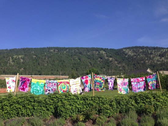 Oyama, كندا: we love tye dye