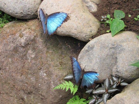 Montezuma, Costa Rica: Mariposario Butterfly Garden
