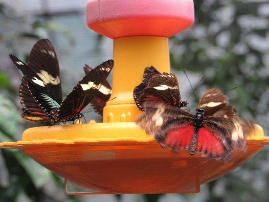 Montezuma, Κόστα Ρίκα: Mariposario Butterfly Garden