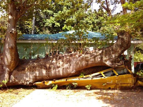 Dominica Botanic Gardens: Bus scolaire écrasé, vestige de l'ouragan David en 1979