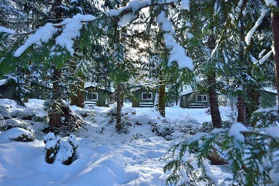 Brackendale, Canadá: Cabins in winter