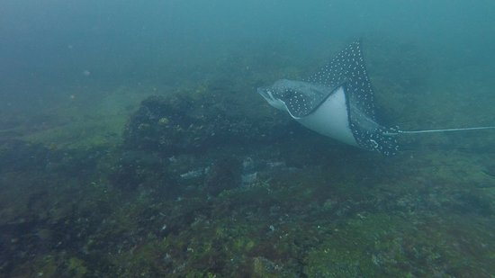 Gulf of Papagayo, Kostaryka: Snorkling with Manta Ray