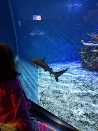 Aquarium of Niagara: IMG_20170415_123622_large.jpg
