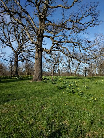 Lisle, IL: Perfect Spring Day Under the Trees