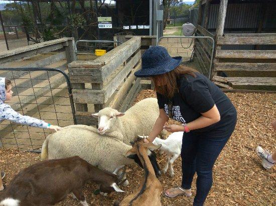 Nulkaba, Αυστραλία: feeding animals
