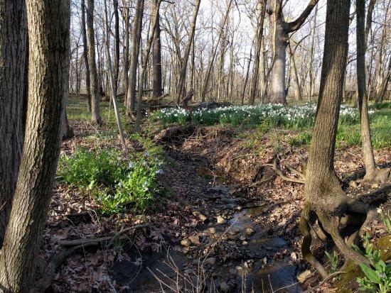 Lisle, IL: Woods Scene