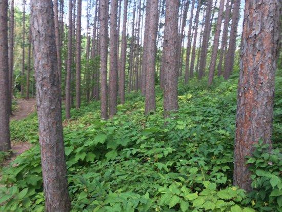 Hawk Ridge Bird Observatory: more woods