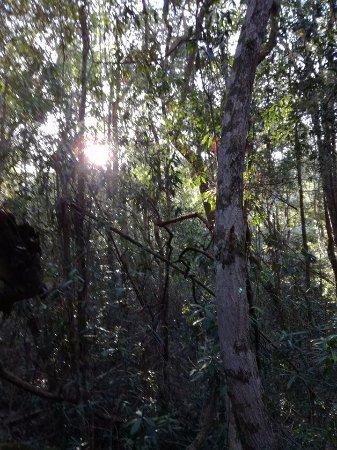 Rheenendal, Sudáfrica: Walking Trail