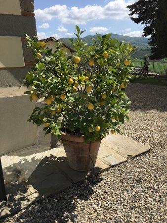 Vicchio, Italy: photo1.jpg